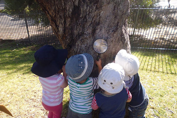 children looking at a tree